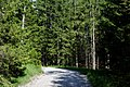 Bayrischzell- Weg von der Sillberg- zur Soin-Alm - geo.hlipp.de - 25802.jpg