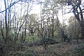 Beacon Hill Woods - geograph.org.uk - 1606050.jpg