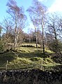 Beardley Plantation from the B5056 - geograph.org.uk - 625408.jpg
