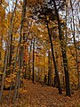 Betty Sutherland Trail - 20191026 - 04.jpg