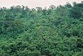 Bhadra rainforest dk.JPG