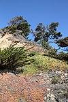 Big Basin Redwoods Park (15399385709).jpg