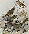 Bird-lore (1914) (14568949997).jpg