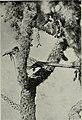 Bird-lore (1915) (14732333696).jpg
