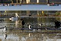 Birds and Rowers (32430632304).jpg