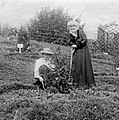 Blathwayt, Col Linley · Suffragette Marie Naylor planting tree with Mary Blathwayt 1910.jpg