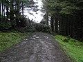 Blocked road, Cashty Wood - geograph.org.uk - 1176720.jpg