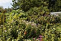 Borders in Victorian garden Quex House Birchington Kent England 2.jpg