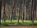 Bosc de Can Deu el 2004 08.jpg