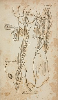 Botanical miscellany (1830-1833) (20401563285).jpg