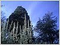Botanischer Garten Freiburg - Botany Photography - panoramio (3).jpg