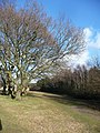 Bournemouth , Field and Trees - geograph.org.uk - 1703902.jpg