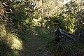 Bowral NSW 2576, Australia - panoramio (115).jpg
