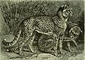 Brehm's Life of animals - a complete natural history for popular home instruction and for the use of schools. Mammalia (1896) (20225203088).jpg