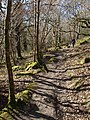 Bridleway on Lustleigh Cleave - geograph.org.uk - 1762243.jpg