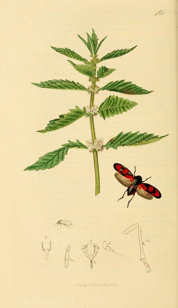 file british entomology volume 7  john curtis  plate 461