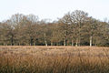 Broadhembury, Colliton Moor - geograph.org.uk - 133317.jpg