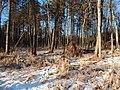 Bryansky District, Bryansk Oblast, Russia - panoramio (32).jpg