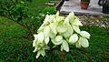 Bunga kertas (4).jpg