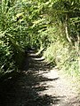 Byway to Win Green, Tollard Royal - geograph.org.uk - 266146.jpg