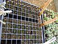 Cadereyta Botanical garden (5761462726).jpg