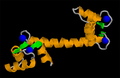 Calmodulin 1CLL.png