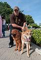 Caminata por los perros y animales Maracaibo 2012 (47).jpg