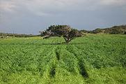 Cape Greco 2012 02 27 4994.jpg