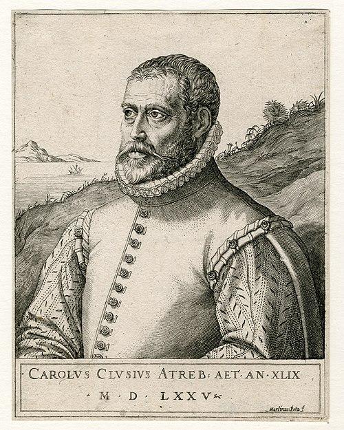 Carolus Clusius by Martin Rota