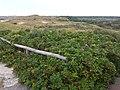 Castricum, Netherlands - panoramio - Han Jongeneel.jpg