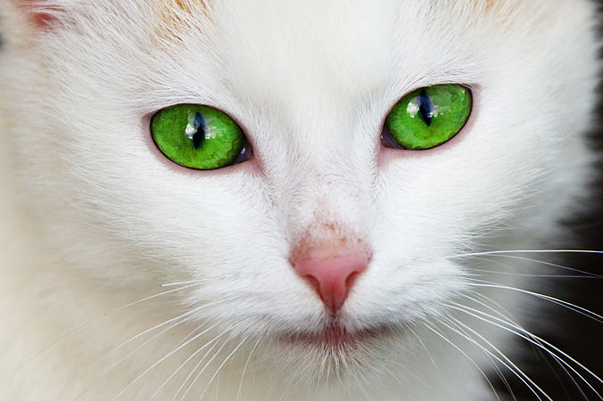 Cat with green eyes.jpg
