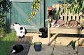 Cats - August 2007 (2352582680).jpg