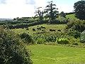 Cattle grazing at Ennaton - geograph.org.uk - 234625.jpg