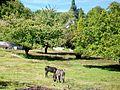 Cergy (95), près du château de Gency, chemin de la Voirie.jpg