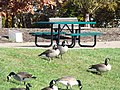 Chadwick Arboretum and Learning Gardens (38258722892).jpg