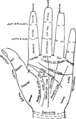 Chart of the Hand.png