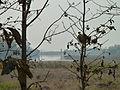 Chiang Rai Province P1110635.JPG