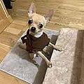 Chihuahua Keko.jpg