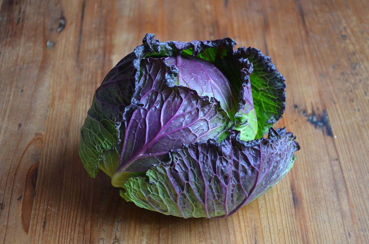 January King Cabbage Wikipedia