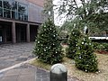 Christmas trees in front of Tallahassee City Hall 02.JPG