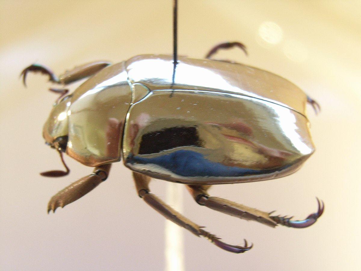 Jewel Scarab Wikipedia