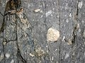 Clast-rich mixtite (Coleman Member, Gowganda Formation, Paleoproterozoic, ~2.3 Ga; Percival Lake roadcut, Ontario, Canada) 5 (40760525673).jpg