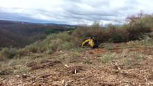 File:Clearing Autumn Olive at Trexler Nature Preserve on the hill slopes of the northern range. November, 2015.webm