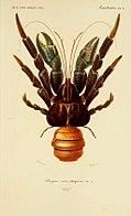 1849年Dictionnaire D'Histoire Naturelle lāī面的圖。