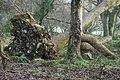 Coed ar Lan Afon Dwyfor - Wood beside Afon Dwyfor - geograph.org.uk - 683874.jpg