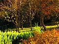 Colours - panoramio (2).jpg