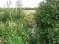 Colwinston Brook, feeder stream of the Afon Alun - geograph.org.uk - 917788.jpg