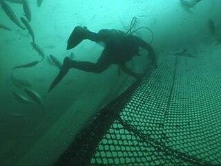 Copper alloys in aquaculture