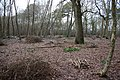 Coppicing in Butchers Wood - geograph.org.uk - 1131911.jpg