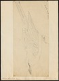Coracias garrula - 1700-1880 - Print - Iconographia Zoologica - Special Collections University of Amsterdam - UBA01 IZ16700215.tif